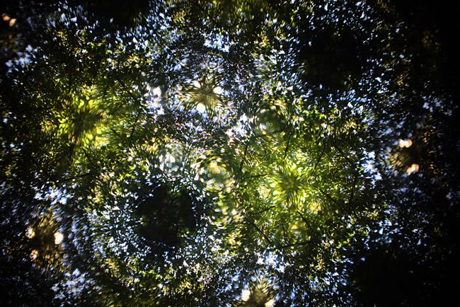 kaleidoscope1IMG_7624