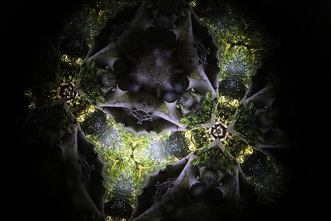 kaleidoscope2IMG_7656